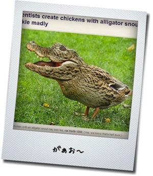 わに鶏.jpg
